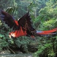 2013 Regenwaldwiederaufforstung in Guatemala